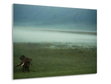 An African Elephant in the Ngorongoro Crater-Chris Johns-Metal Print