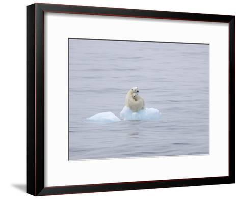 Polar Bear and Cub on a Floating Chunk of Ice-Ira Meyer-Framed Art Print