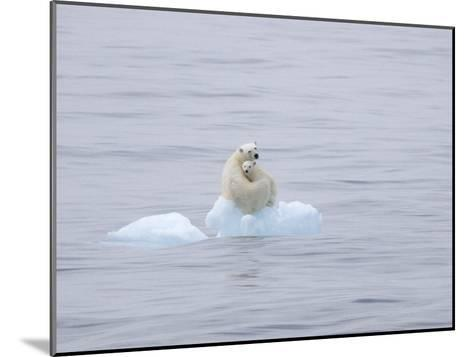 Polar Bear and Cub on a Floating Chunk of Ice-Ira Meyer-Mounted Photographic Print