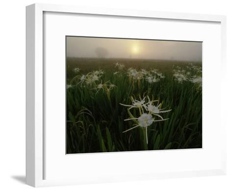 Spider Lilies Thriving on a Tallgrass Coastal Prairie-Raymond Gehman-Framed Art Print