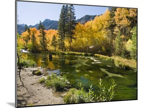 Aspen Trees Lining the Shallow Bed of a Mountain Stream-James Forte-Mounted Photographic Print