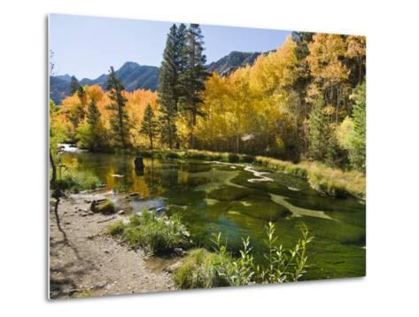 Aspen Trees Lining the Shallow Bed of a Mountain Stream-James Forte-Metal Print