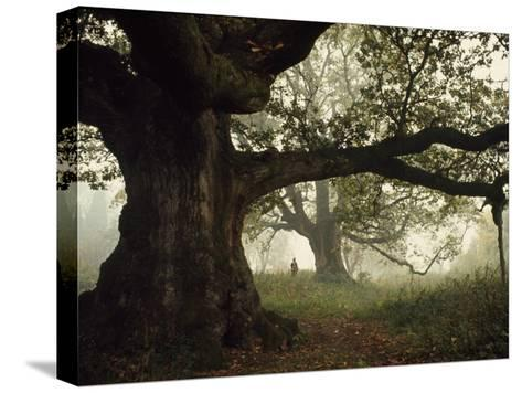 Ancient Trees Dwarf Visitors to Historic Great Birnam Wood-Dean Conger-Stretched Canvas Print