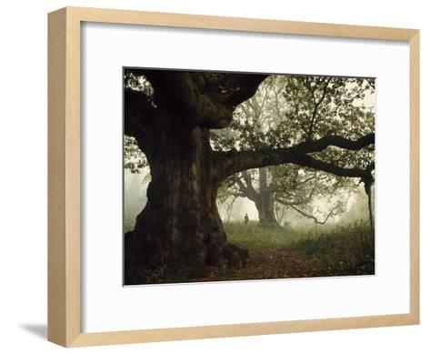 Ancient Trees Dwarf Visitors to Historic Great Birnam Wood-Dean Conger-Framed Art Print