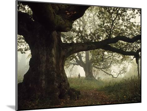Ancient Trees Dwarf Visitors to Historic Great Birnam Wood-Dean Conger-Mounted Photographic Print