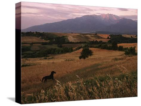 Horse Running Through Fields at the Base of Mount Olympus-James L^ Stanfield-Stretched Canvas Print