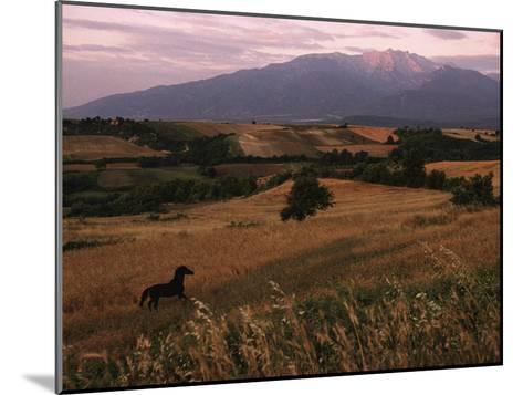 Horse Running Through Fields at the Base of Mount Olympus-James L^ Stanfield-Mounted Photographic Print