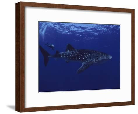 A Diver Swims with a 35-Foot-Long Whale Shark-David Doubilet-Framed Art Print