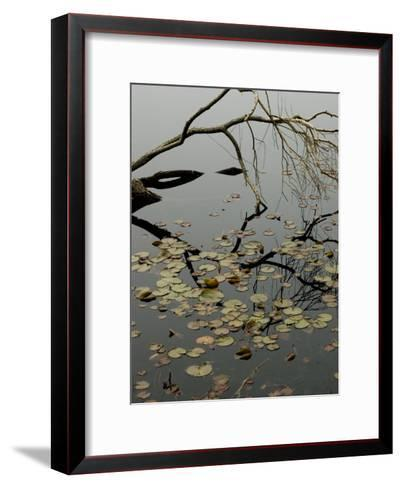 The Branch of a Tree Reflected on a Pond with Water Lily Pads-Todd Gipstein-Framed Art Print