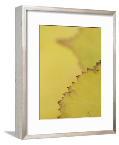 Leaves of the California Blackberry Plant Shot at High Magnification-Phil Schermeister-Framed Art Print