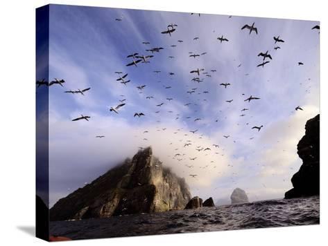 Cloud Covers a Sea Bird Rookery High on a Sea Stack Cliff-Jim Richardson-Stretched Canvas Print