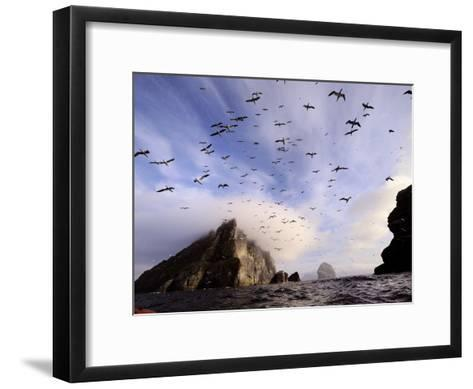 Cloud Covers a Sea Bird Rookery High on a Sea Stack Cliff-Jim Richardson-Framed Art Print
