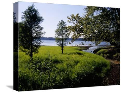 Pond Cypress Trees Growing Along the Shore of Kentucky Lake-Raymond Gehman-Stretched Canvas Print