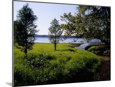 Pond Cypress Trees Growing Along the Shore of Kentucky Lake-Raymond Gehman-Mounted Photographic Print