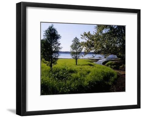 Pond Cypress Trees Growing Along the Shore of Kentucky Lake-Raymond Gehman-Framed Art Print