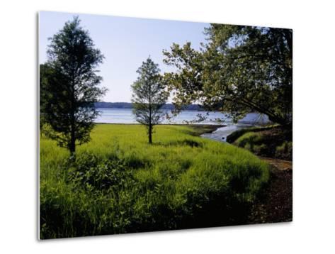 Pond Cypress Trees Growing Along the Shore of Kentucky Lake-Raymond Gehman-Metal Print