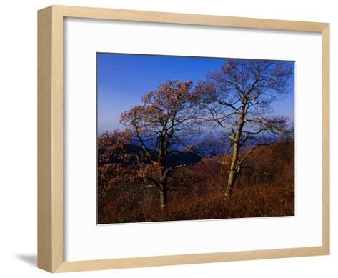 Oak Trees in Autumn Colors in a Mountain Scenic-Raymond Gehman-Framed Art Print