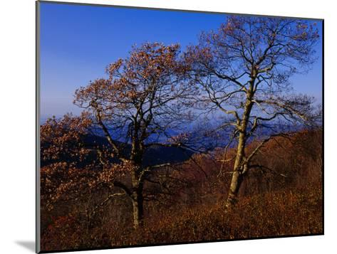 Oak Trees in Autumn Colors in a Mountain Scenic-Raymond Gehman-Mounted Photographic Print