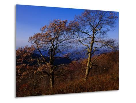 Oak Trees in Autumn Colors in a Mountain Scenic-Raymond Gehman-Metal Print