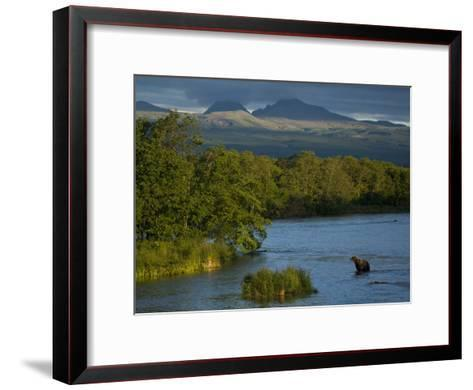 A Brown Bear Wading in a River in the Kronotsky Nature Reserve-Michael Melford-Framed Art Print