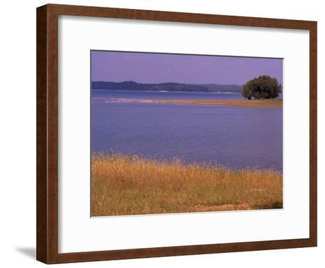 Gulls Resting on a Sandbar in Kentucky Lake-Raymond Gehman-Framed Art Print