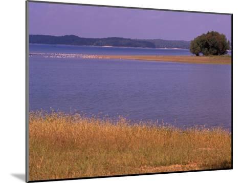 Gulls Resting on a Sandbar in Kentucky Lake-Raymond Gehman-Mounted Photographic Print