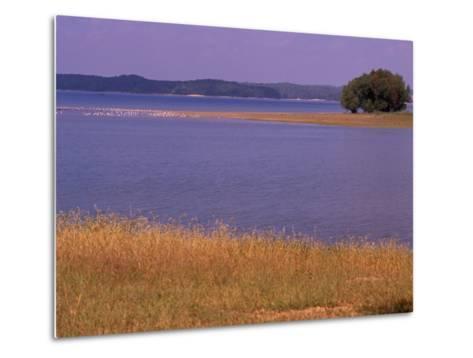 Gulls Resting on a Sandbar in Kentucky Lake-Raymond Gehman-Metal Print