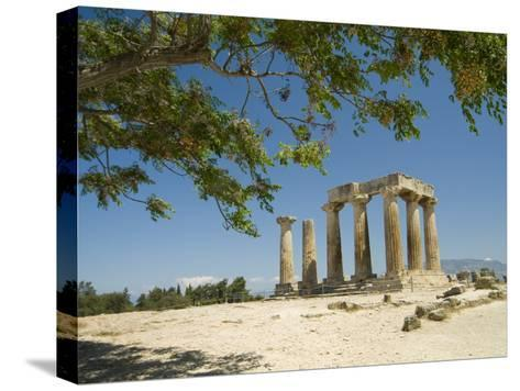 The Doric-Style 550 Bc Temple of Apollo and a Branch of an Olive Tree-Richard Nowitz-Stretched Canvas Print
