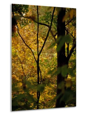 Grape Vines and Trees in Autumn Hues-Raymond Gehman-Metal Print