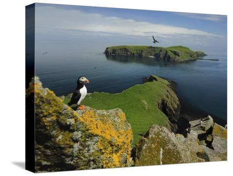 The Shaint Islands are Breeding Grounds for Puffins and Razorbills-Jim Richardson-Stretched Canvas Print