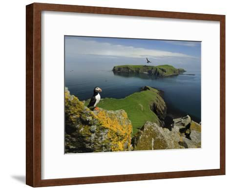 The Shaint Islands are Breeding Grounds for Puffins and Razorbills-Jim Richardson-Framed Art Print