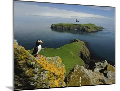 The Shaint Islands are Breeding Grounds for Puffins and Razorbills-Jim Richardson-Mounted Photographic Print