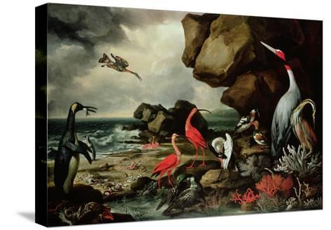 A Penguin, a Pair of Flamingoes, and Other Exotic Birds, Shells, and Coral on the Shoreline-Philip Reinagle-Stretched Canvas Print