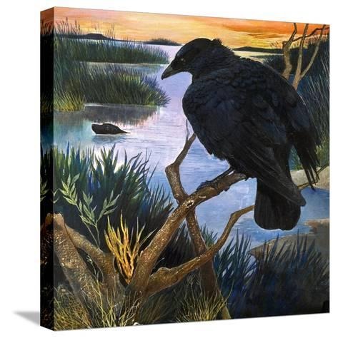 The Crow, Illustration from 'The Black Shadow', by F. St Mars, 1966-G^ W Backhouse-Stretched Canvas Print
