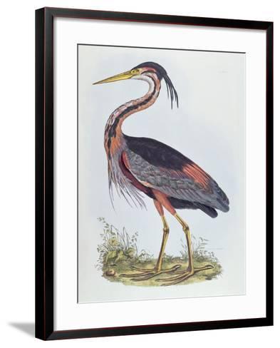 Purple Heron, from 'Illustration of British Ornithology'-Prideaux John Selby-Framed Art Print