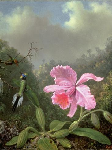 Still Life with an Orchid and a Pair of Hummingbirds, C.1890S-Martin Johnson Heade-Stretched Canvas Print