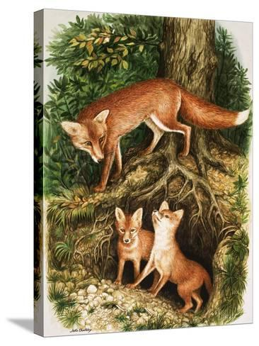 The Fox Family, Illustration from 'Once Upon a Time', 1971-John Chalkley-Stretched Canvas Print