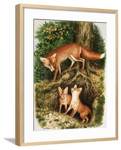 The Fox Family, Illustration from 'Once Upon a Time', 1971-John Chalkley-Framed Art Print