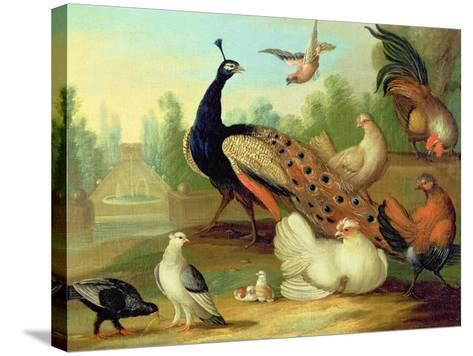 A Peacock, Doves, Chickens and a Jay in a Park-Marmaduke Cradock-Stretched Canvas Print