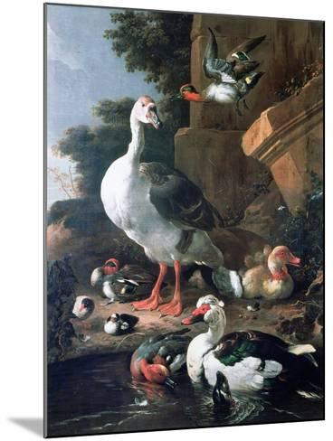 Waterfowl in a Classical Landscape, 17th Century-Melchior de Hondecoeter-Mounted Giclee Print