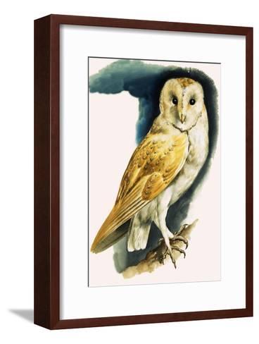 Barn Owl, Illustration from 'Peeps at Nature', 1963-English Photographer-Framed Art Print