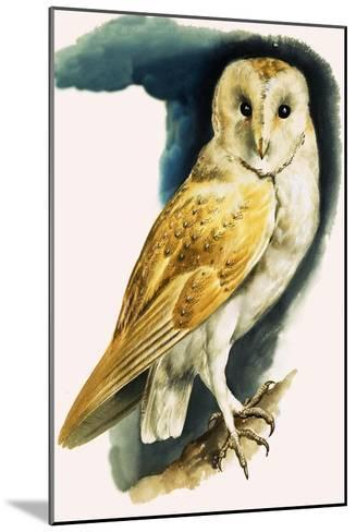 Barn Owl, Illustration from 'Peeps at Nature', 1963-English Photographer-Mounted Giclee Print