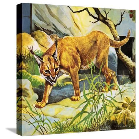 Who's Who in the Zoo: the King's Pet Cat-G^ W Backhouse-Stretched Canvas Print