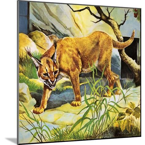Who's Who in the Zoo: the King's Pet Cat-G^ W Backhouse-Mounted Giclee Print
