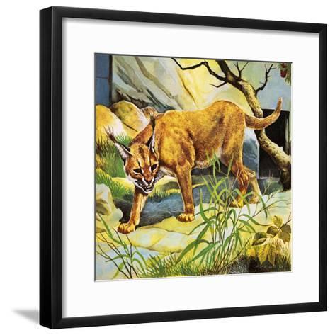 Who's Who in the Zoo: the King's Pet Cat-G^ W Backhouse-Framed Art Print
