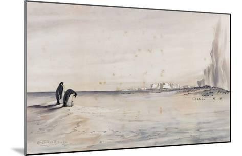 The Emperor Penguin Rookery, Cape Crozier-Edward Adrian Wilson-Mounted Giclee Print