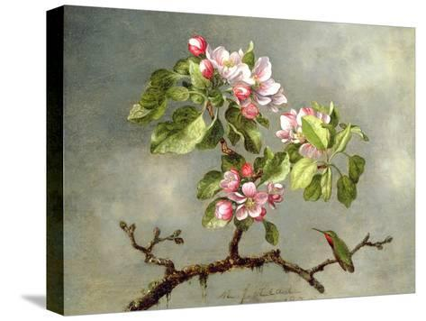 Apple Blossoms and a Hummingbird, 1875-Martin Johnson Heade-Stretched Canvas Print