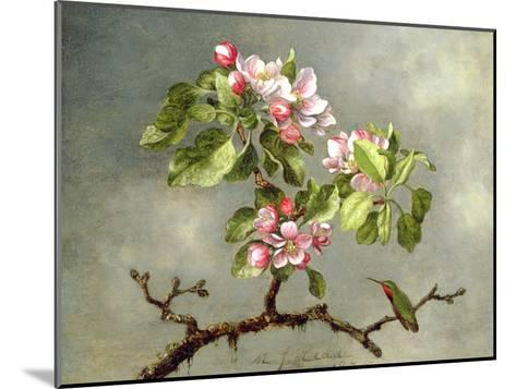 Apple Blossoms and a Hummingbird, 1875-Martin Johnson Heade-Mounted Giclee Print