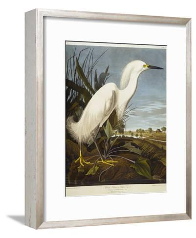 Snowy Heron or White Egret / Snowy Egret-John James Audubon-Framed Art Print