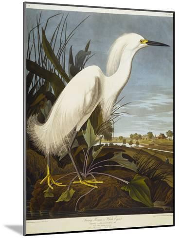 Snowy Heron or White Egret / Snowy Egret-John James Audubon-Mounted Giclee Print